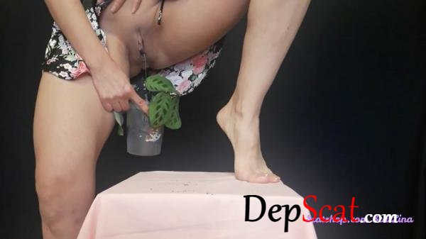 I plant a flower and fertilize it Big pile, New scat, Scatting Girl, Shitting Ass - Shit, Piss, Solo [FullHD 1080p/339 MB]